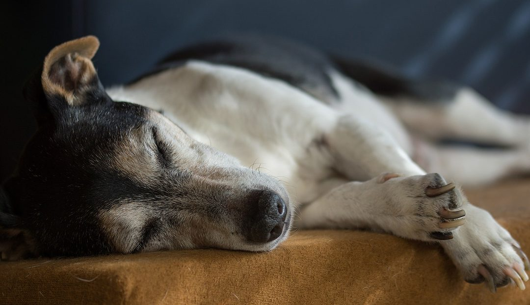 How We Manage Your Pet's Pain Without Medication